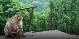 iwatayama monkey park kyoto vicki viaja