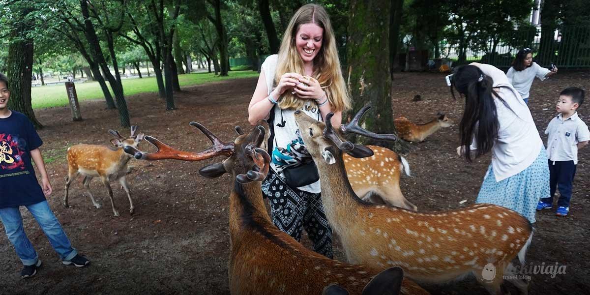Nara Stadt der Rehe in Japan vicki viaja