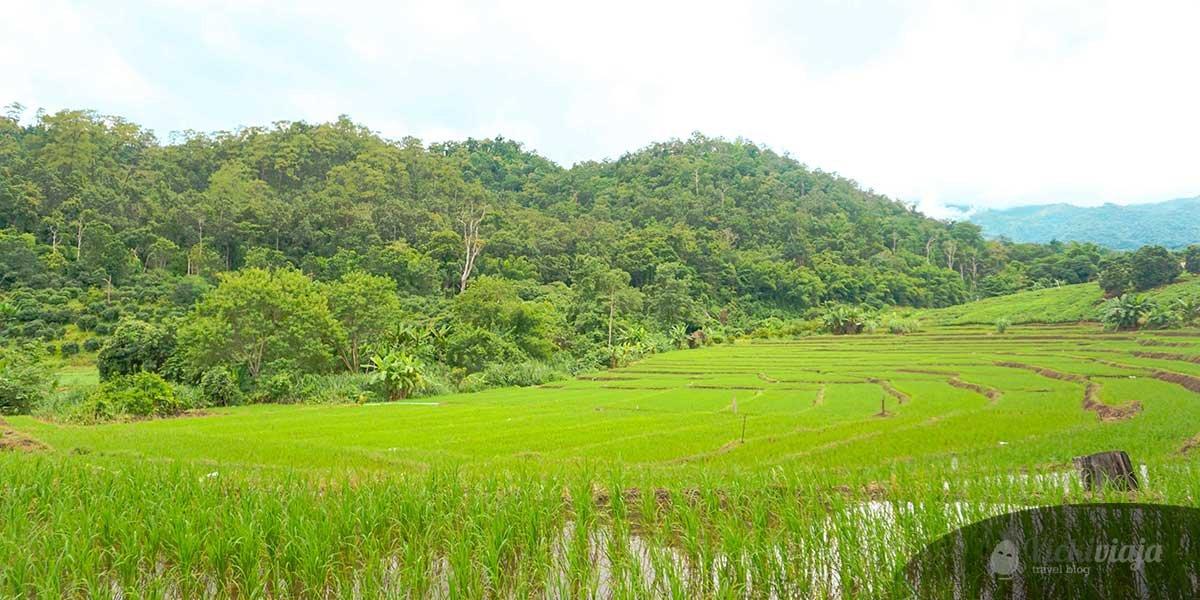 Die besten Sehenswürdigkeiten in Pai, Nordthailand, 1. Reisterrassen von Pai