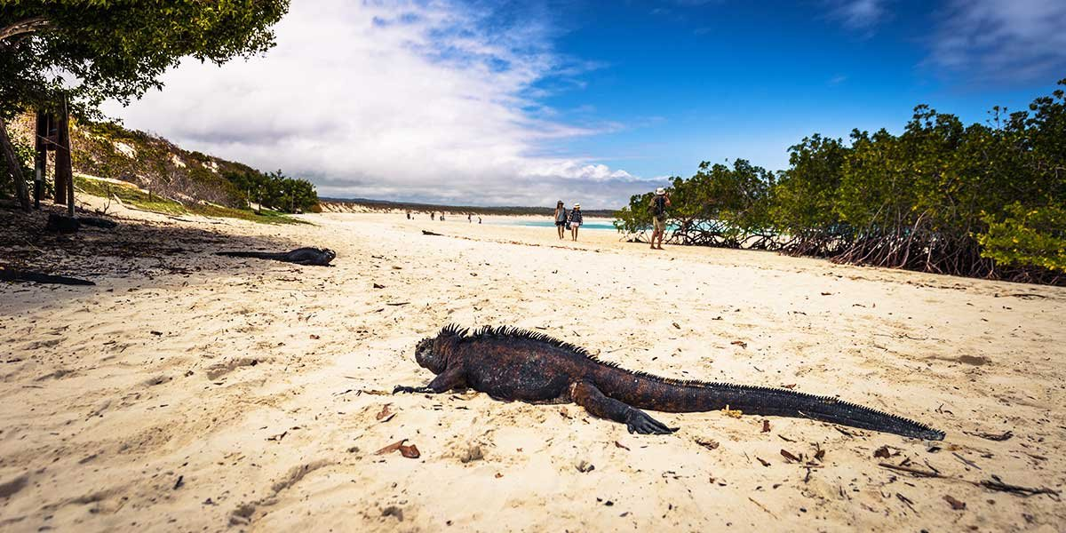 Santa Cruz Island Galapagos, Puerto Ayora