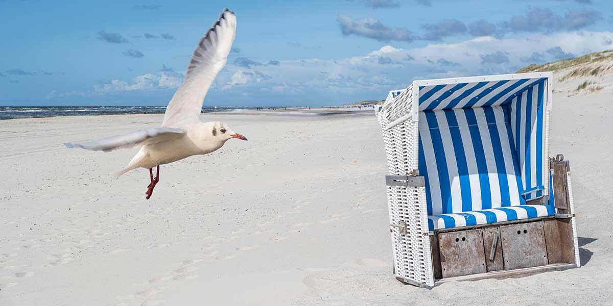 best german beaches, seagul